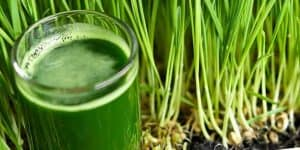 Wheat grass powder and shot